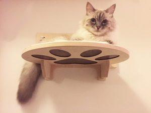 Mensola per gatto