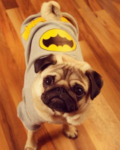 Batman The BatPug