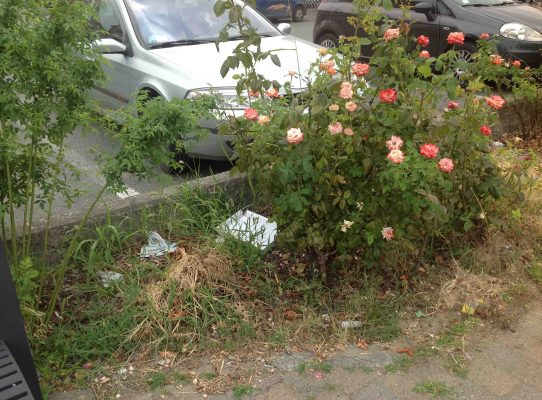rose con rifiuti