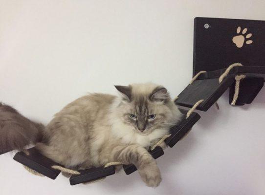 Ponte per gatto in legno artigianale