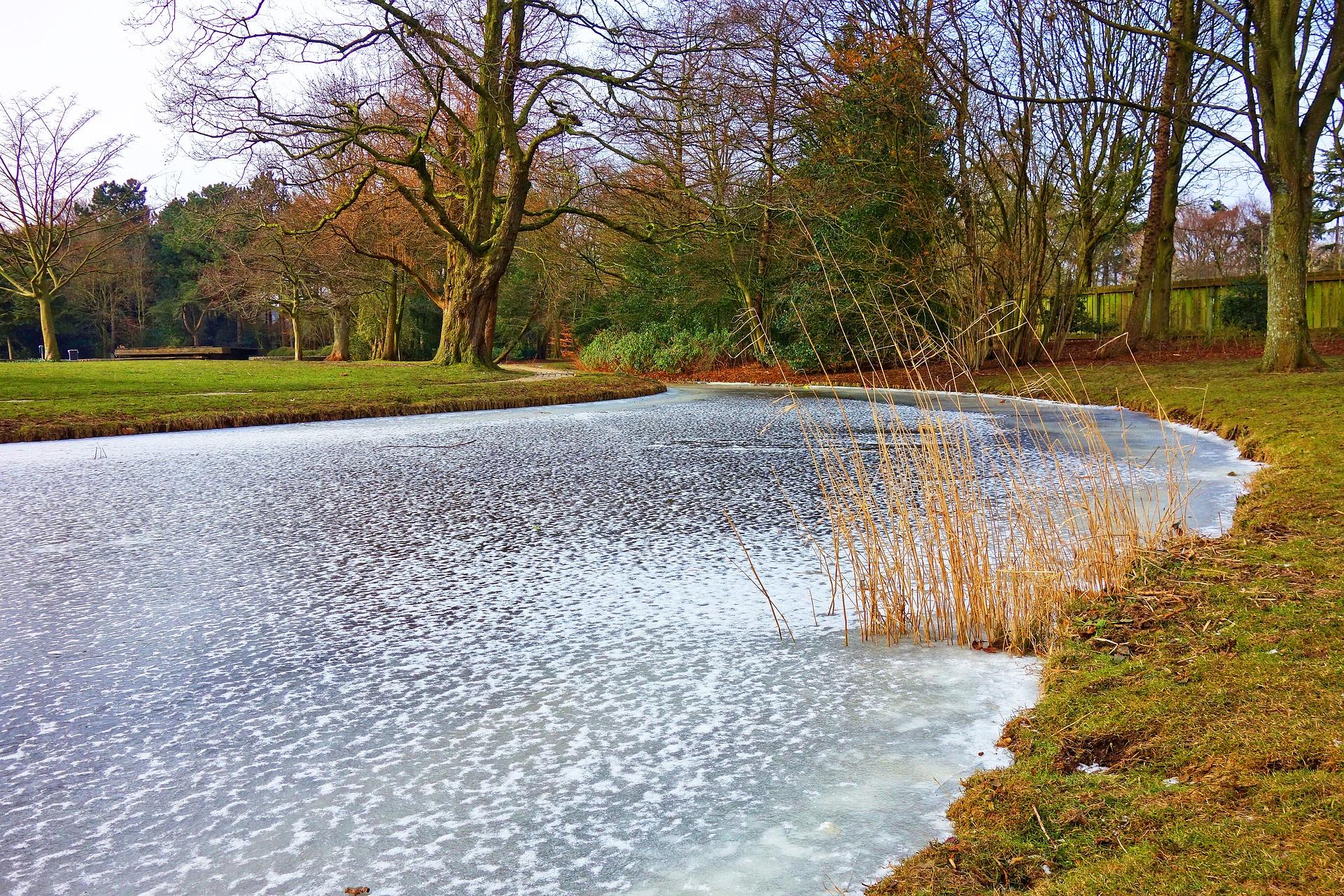 Telo Per Laghetto Da Giardino tutto ciò che c'è da sapere sui laghetti da giardino