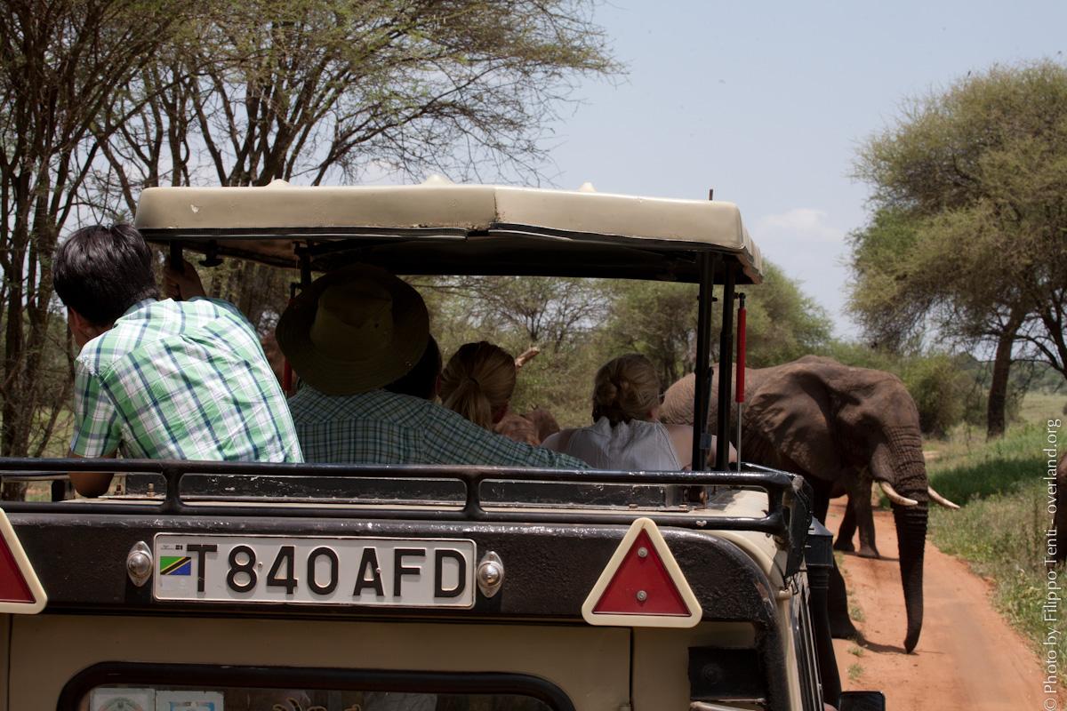 safari viaggi