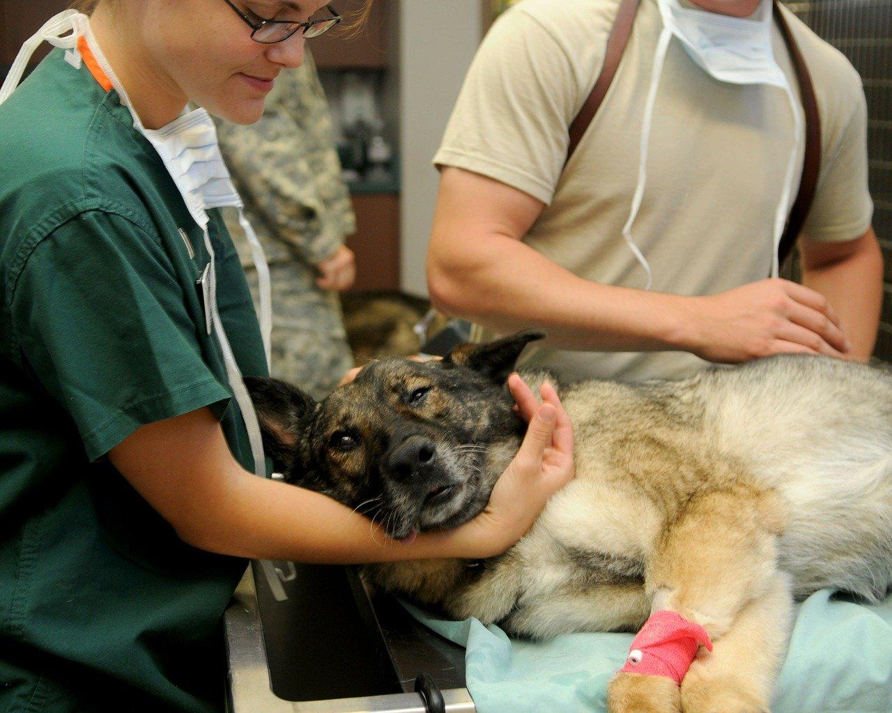 Quando l'amore per gli animali diventa lavoro