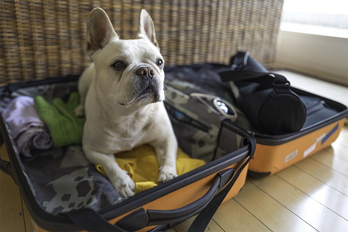 cane dentro una valigia
